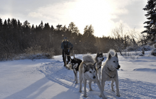 Dog sledding Trek
