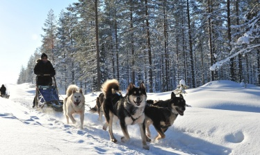 Following Jack London - Dog-Sledding